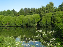 Willows and lake Stock Images