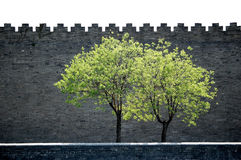 Willows outside the wall. Sunbeam shining over two spring willows outside the wall of Forbidden city, Beijing Stock Photography