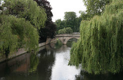 Willows over river Cam. Stock Images