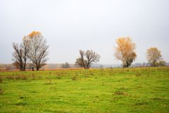 Willows and poplars trees with yellow leaves on green grass meadow near dry reeds, forest in the horizon, cloudy rainy sky. And mist in Ukraine in autumn royalty free stock photos