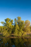 Willows Reflected On Water Stock Photography