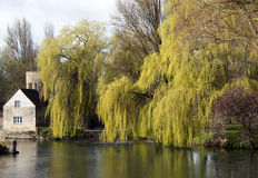 Willows by river Thames, England. Weeping willows and an old stone house by the river Thames in a springtime Royalty Free Stock Photo