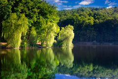 Willows on the shore of the lake. Branches of willow in the sunlight on the shore of the lake royalty free stock images