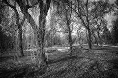 Willows in spring park Stock Photos