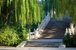 Willows and steps Stock Photo