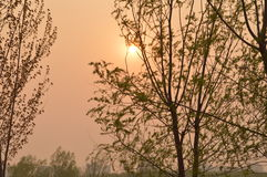 Willows at Sunset in park Royalty Free Stock Photo