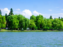 Willows by West Lake Cultural Landscape of Hangzhou. Willows growing by West Lake Cultural Landscape in Hangzhou city Zhejiang province China stock image