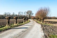 Wilows de Pollard le long d'une route de campagne néerlandaise Image stock