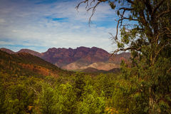 Wilpena Pound from a lookout. A river red gum frames the ramparts of Wilpena Pound Stock Image