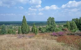 Wilseder Berg,Lueneburg Heath,Lower Saxony,Germany Royalty Free Stock Image