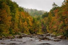 Wilson Creek Autumn 1 Royaltyfri Foto