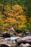 Wilson Creek Autumn 11 Royaltyfri Fotografi