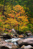 Wilson Creek Autumn 11 Royalty Free Stock Photography