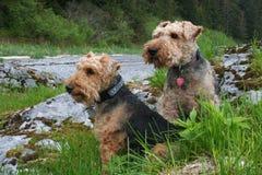 Wilson et Annie Photographie stock