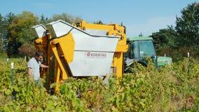 Wilson NY, USA, Oktober 2017: Bondearbete i vingården Traktoren drar en special maskin som samlar druvor lager videofilmer