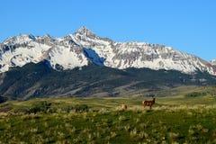 Wilson Peak et élans, tellurure le Colorado Images stock