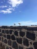 Wilson skjuter från bakhåll Tenerife Royaltyfri Fotografi