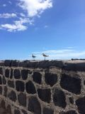 Wilson spara da un nascondiglio Tenerife Fotografia Stock Libera da Diritti