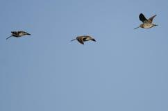 3 Wilson& x27; s стрелять летание в голубом небе Стоковая Фотография