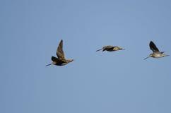 3 Wilson& x27; s стрелять летание в голубом небе Стоковое фото RF