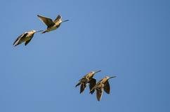 4 Wilson& x27; s стрелять летание в голубом небе Стоковое Изображение
