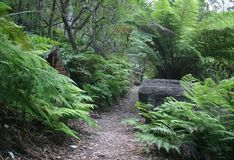 Wilsons Promontory Track Royalty Free Stock Photos