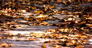 Wilt. Leaf fall from tree and wilt that is truth Royalty Free Stock Photography