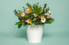 Wilted bouquet in white pail. Wilted bouquet a chamomile in white pail royalty free stock image