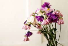 Wilted Flowers. Pink and purple wilted flowers Royalty Free Stock Photography