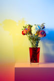 Wilted flowers in red water in colored light. Flowers just starting to wilt in a tall transparent vase and red water in front of a white wall colored a number of Stock Photos