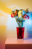 Wilted flowers in red water in colored light. Flowers just starting to wilt in a tall transparent vase and red water in front of a white wall colored a number of Stock Images