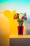 Wilted flowers in red water in colored light. Flowers just starting to wilt in a tall transparent vase and red water in front of a white wall colored yellow and Royalty Free Stock Image