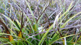 Wilted Grass Stock Photos