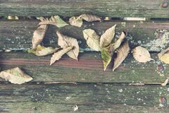 Wilted Leaves on Brown Wooden Surface Royalty Free Stock Photography