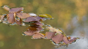 Wilted leaves on the lake water. Wilted leaves floating on the surface of the magnificent lake stock footage