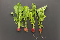 Wilted radish Royalty Free Stock Images