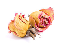 Wilted rose Stock Photo