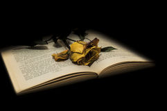 Wilted rose on book. In dark background royalty free stock photo