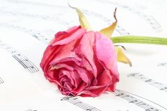 Wilted rose flower on the music paper Stock Photo