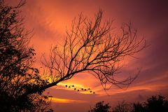 Wilted tree with sunset glow. Background, the bird are going home from work, warming screen with sunset sky Royalty Free Stock Images