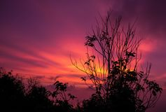 Wilted tree with sunset glow. Background, warming screen with sunset sky. Silhouette tree make it feel lonely Stock Images
