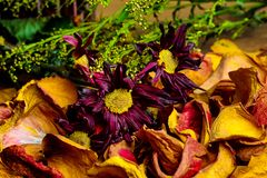 Wilting and Drying Fall Colors Bouquet royalty free stock photos