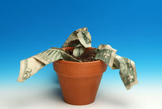 Wilting economy Stock Photography
