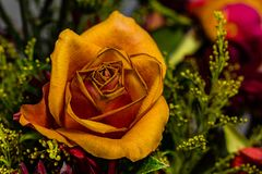 Wilting Fall Colored Rose in a drying fall Bouquet royalty free stock photo
