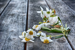 Wilting Flowers Stock Images