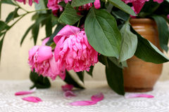 Wilting peony flowers in a vintage clay jar Stock Images