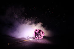 A wilting rose signifies lost love, divorce, or a bad relationship, dead rose on dark background Stock Photos