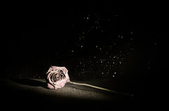 A wilting rose signifies lost love, divorce, or a bad relationship, dead rose on dark background Royalty Free Stock Photo