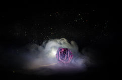 A wilting rose signifies lost love, divorce, or a bad relationship, dead rose on dark background. With smoke stock photography