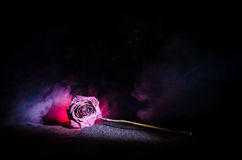 A wilting rose signifies lost love, divorce, or a bad relationship, dead rose on dark background. With smoke royalty free stock photos
